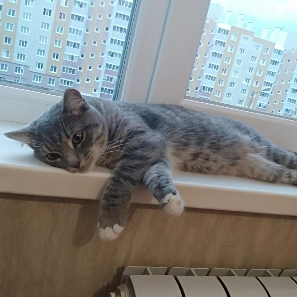 Котик Вася